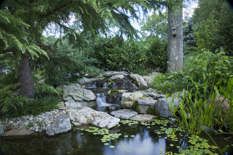 Garden pond surrounded by rocks and trees