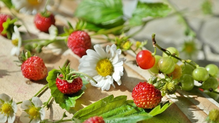 Wild strawberries near a daisy and other berries