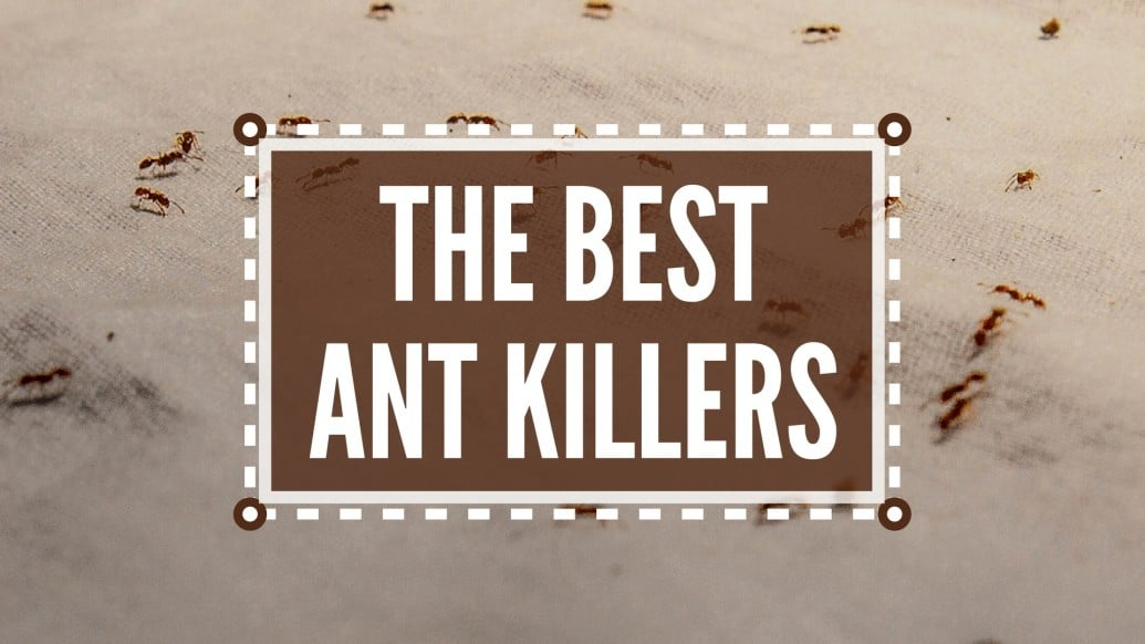 best ant killer, ant killer, ant traps, best ant killer, ant poison, best ant traps, best ant bait, best outdoor ant killer, best indoor ant killer, ant bait traps, ant bait, ant spray, best ant spray, best ant killer indoor, best ant killer for home, best ant poison, what is the best ant killer, best ant repellent, ant killers, indoor ant killer, ant killer products, best ant killer, best ant bait, ant spray, ant poison, best indoor ant killer, indoor ant killer, best ant spray, best outdoor ant killer, best ant killer indoor, outdoor ant killer, best ant killer for home, ant killer powder, great ant,