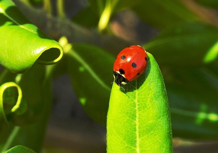 Ladybug sitting on a leaf