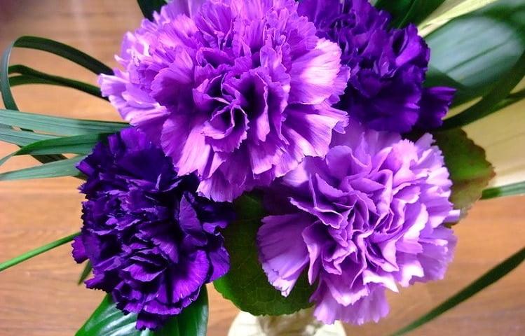 Moondust purple carnation