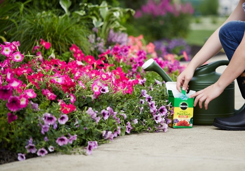 Miracle-Gro Water Soluble All Purpose Plant Food, best potting soil, best potting mix, soil brands, best potting soil brands, best potting soil brands for vegetables, best soil for potted plants, organic potting soil, best potting soil for indoor plants, best organic potting soil, best potting soil for vegetables, best potting mix for vegetables, organic potting soil reviews, top rated potting soil, soil brand, what is the best potting mix, what is the best potting soil, best price on potting soil, the best potting soil, potting soil reviews, potting soil. best potting soil, well draining potting soil, what is potting soil, best soil for potted plants, what is potting soil made out of, dirt for plants, sterile potting soil, soil for indoor plants, when to use potting soil, indoor potting soil vs outdoor potting soil, high quality potting soil, best potting soil for indoor plants, acidic potting soil, what is potting mix, potting soul, best potting mix, potting mix vs potting soil, best potting soil for flowers