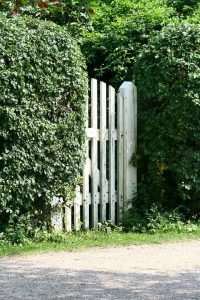 shrubs, shrubs for privacy, privacy shrub, backyard