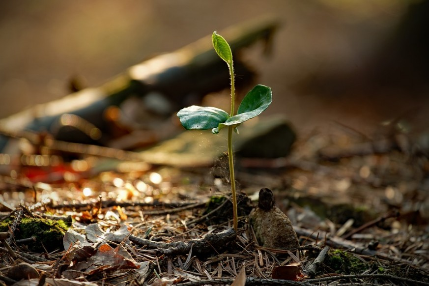 organic ways to boost nitrogen, nitrogen, soil, planting