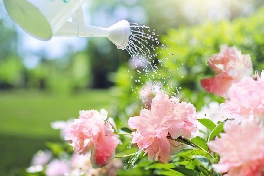 overwatering, overwatering plants, dying plants