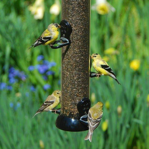 Droll Yankees Onyx Nyjer Tube Bird Feeder