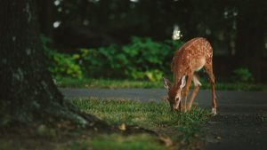 how to keep deer from gobbling your garden