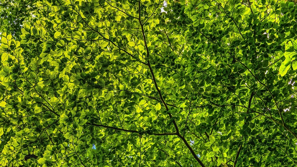 shade trees, the best shade trees to make your home cooler for the summer
