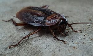 effective and natural ways to get rid of cockroaches