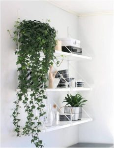 vines that look good in any home