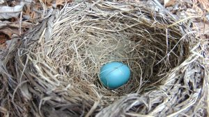 how to prevent birds from making unwanted nests, unwanted nests, birds, bird nests