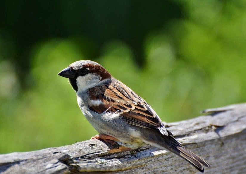 benefits of having birds around your house