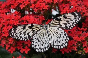 attract more butterflies into your yard