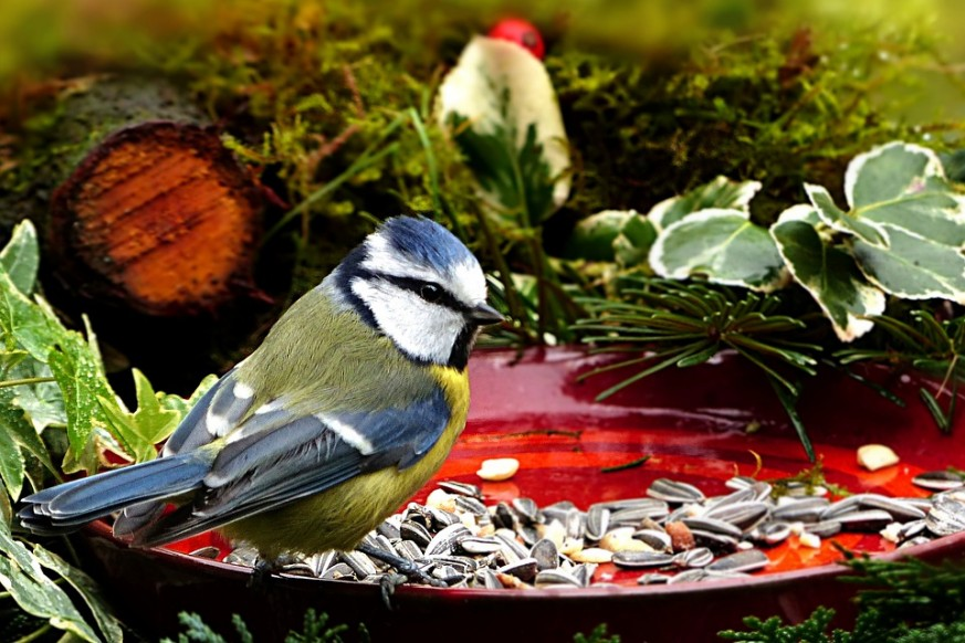 bird feeder food