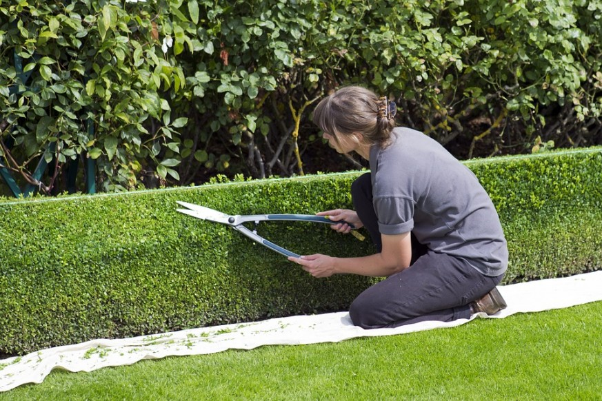 How To Safely Remove Old Hedges And Bushes In 6 Easy Steps