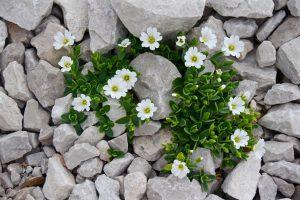 rock garden ideas, rock garden