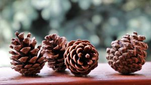 things to make out of pine cones