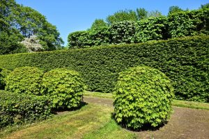 hedges and bushes