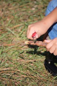 the basics of whittling