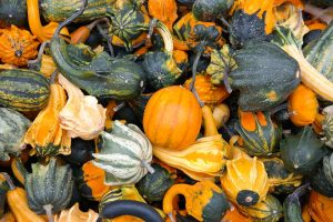 squash in the fall