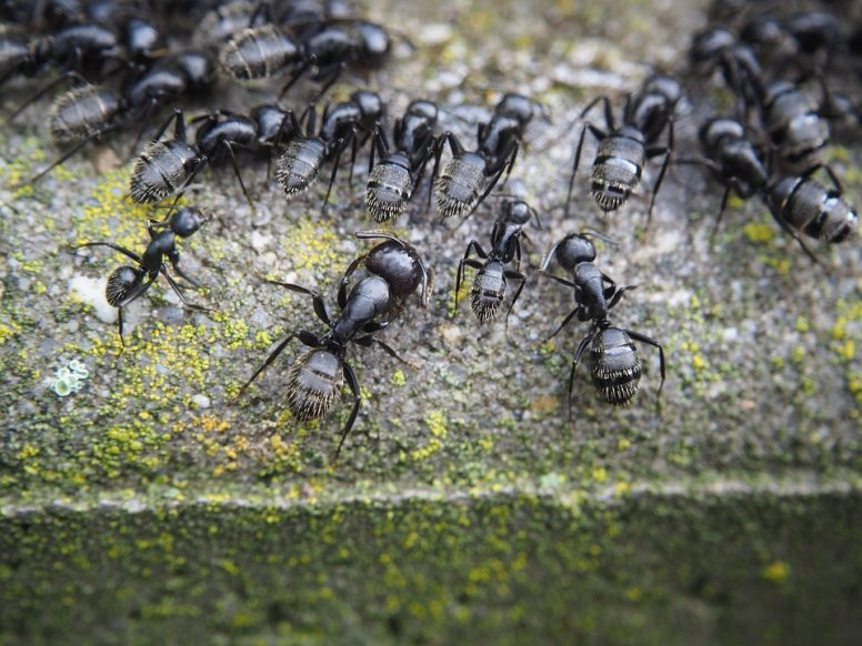 get rid of ants outside