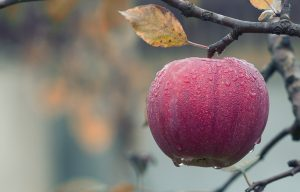 fall fruits, fall seasonal fruits, what fruits are in season in september, fall fruits and vegetables, fall season foods, fall seasonal vegetables, vegetables in season september, fall seasonal produce, fall produce