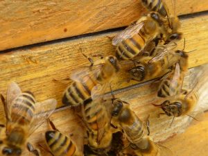 bee removal wichita ks, bee removal, bee exterminator, bee removal service, bee exterminator near me, bee removal near me, bee control service, bee pest control, bee control