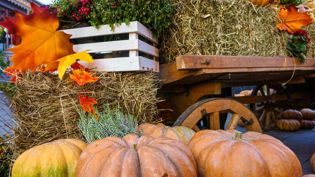 harvest party, harvest party ideas, fall harvest party, harvest festival game ideas, autumn harvest party, how to throw a fall party, harvest festival ideas