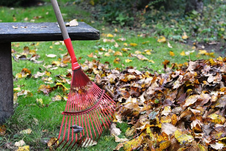 why rake leaves off lawn, why rake leaves, leaves on lawn over winter, should i rake leaves in the fall, what happens if you don t rake your leaves, to rake or not to rake leaves, rake up leaves, rake the yard, mowing leaves instead of raking, rack the leaves, should leaves be removed from lawn, leaves on lawn, rake it up clean, why do you rake leaves, why do people rake leaves, do i need to rake leaves, rake leaves or leave them, rake my leaves, lawn rake, why do you have to rake leaves, is it good to leave leaves on the lawn, leave leaves on lawn, fall yard clean up, how to rake, why do people rake leaves, what happens if you don t rake your leaves, why do you have to rake leaves, how to get leaves up quickly, why rake leaves off lawn, should i rake leaves in the fall, rake leaves or leave them