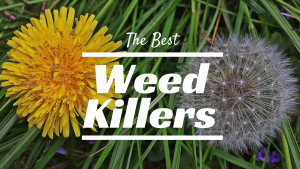 best weed killer, weed killer, what is the best weed killer, best weed killer on the market, best weed killer spray, best weed killer for gardens, best weed and grass killer, garden weed killer, good weed killer for gardens, best grass killer, good weed killer, weed killer concentrate, best weed control, best weed killer for lawns, what's the best weed killer, weed killer brands, best weed killer for lawns reviews, commercial weed killer, best weed and feed, best weed killer concentrate, weed killer reviews, strong weed killer, top rated weed killer, most effective weed killer, what is the best weed and grass killer, best weed and grass killer concentrate, top weed killer, fastest weed killer, industrial weed killer, best weed killer out there, industrial grade weed killer, where to buy commercial grade weed killer, commercial grade weed killer, best dandelion killer, best weed and grass killer reviews, weed killer spray reviews, fast acting weed killer review, granular weed killer, professional strength weed killer, best herbicide, what weed killer works best, best commercial weed and grass killer, garden weed killers reviews, good grass killer, top 5 weed killers, good commercial grade weed killer, best commercial weed killer, industrial strength weed killer, top ten weed killers, what is the best weed killer in the world, different brands of weed killers, lawn herbicide reviews, commercial weed killer concentrate, what is a good weed killer, best rated weed killer for lawns, best vegetation killer, broadleaf weed killer reviews, best rated weed killer, best weed killer available, best weed killer concentrate for lawns, weed killer best results, number one weed killer, best weed grass killer, professional weed killer, broadleaf killer, post emergent weed killer, best weed and grass killer on the market, world's strongest weed killer, weed killer for grass reviews, best weed killer for grass, best brush killer concentrate, weed killer for large areas, best granular