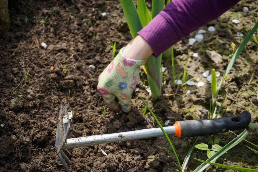 weed maintenance, fall, garden, gardening, pulling weeds, garden weeds