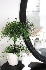 Vine Topiary