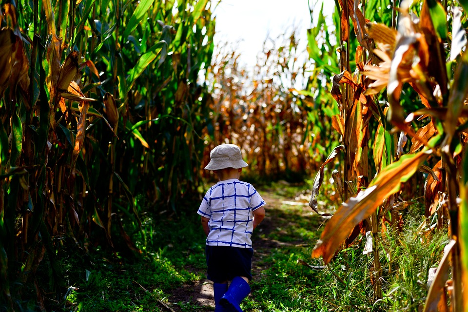 bergmann corn maze, bergmans corn maze, bergmans pumpkin patch, corn maze wichita ks, pumpkin patch wichita ks, pumpkin patch wichita ks macarthur, bergmann corn maze wichita ks, pumpkin patches in kansas, bergmann pumpkin patch, corn maze wichita kansas, kansas corn maze, wichita pumpkin patch, pumpkin patches near wichita ks, pumpkin patches around wichita ks, pumpkin patches in wichita ks area, corn maze and pumpkin patch near me, cox corn maze wichita ks, pumpkin patch wichita ks area, pumpkin patch near pratt ks, pumpkin patch corn maze, pumpkin patch and corn maze, gaeddert corn maze buhler, buhler corn maze, kansas maze, buhler ks, maze kansas, gaeddert corn maze, gaeddert farms, gaeddert corn stands, pumpkin patch corn maze near me, walters pumpkin patch, free pumpkin patch near me, cheap pumpkins near me, applejack pumpkin patch, cheap pumpkin patch, marietta pumpkin patch andover ks, apple jacks farm admission prices, pumpkins for sale near me, free pumpkin patch, best pumpkin patch near me, kansas pumpkin patches 2015, p and m pumpkin patch, cox farms wichita ks, burns pumpkin patch, corn maze, corn maze near me, cornmaze, corn maze near me 2017, mazes near me, corn maze 2017, hay maze, maze corn, corn field maze near me, maze in, local corn mazes near me, best corn maze near me, maize maze, night corn mazes near me, hay maze near me, corn fields near me, corn maze october, what is a corn maze, find corn, corn maze 2017 near me, corn maze virginia, big corn maze near me, pumpkin maze near me, halloween corn maze 2017, corn maze farms near me, biggest corn maze in the us, night time corn maze near me, how are corn mazes made, pumpkin patch near us, biggest corn maze in america, danville corn maze, www cornmaze com, maze maize, corn maze lubbock, farm mazes near me, outdoor maze near me, maize maze 2017, corn labyrinth, corn maze mn, pierce corn maze 2017, corn maze buffalo ny, lodi corn maze, corn maze wisconsin, corn maze michigan, fun mazes near me, livermore corn maze, corn maze definition, pumpkin maze, first corn maze, field maze, maze in the maize, cool mazes, a corn maze, corn maze history, corn maze themes, maize corn maze, halloween corn maze, corn maze facts, dixon corn maze, maize maze uk, cut corn field, maize maize, largest corn field, crop maze, largest corn maze, wicked island wichita ks, house of terror wichita ks, haunted corn maze kansas, haunted houses wichita ks 2017