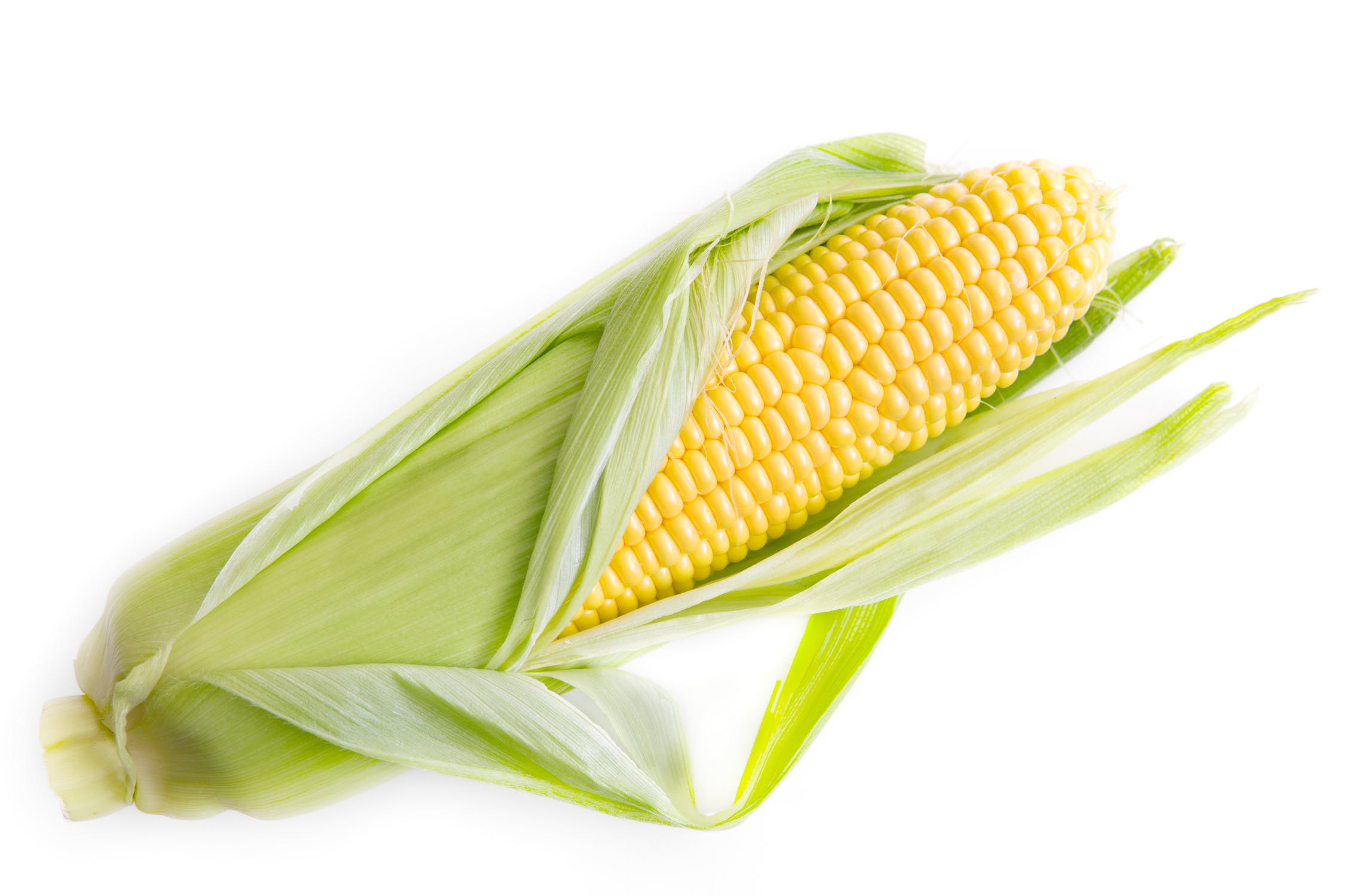 shucking corn, what is shucking corn, corn cob shucker, what is a corn shuck, how to husk corn on the cob, what is shucking, corn shucking video, shucking corn with ken, easy shucking corn video, how to husk corn, how to shuck corn, what is corn husk, what does it mean to shuck corn, husk of corn, how to clean an ear of corn, remove husk from corn, peeling corn, how to husk corn quickly, easy way to shuck corn, corn silk remover, husking corn by hand, how to shuck corn on the cob, how to clean corn, how to peel corn on the cob, how to peel corn, how to remove silk from corn, best way to shuck corn, cleaning corn on the cob, how to clean corn on the cob, easiest way to shuck corn for freezing, how to peel corn without silk, how to shuck corn without microwave, easy way to shuck corn without cooking it, stuff that sticks out of an ear of corn, how to shuck corn easily, corn shucking trick, easy way to shuck corn without microwave, shuck corn easy, how to shuck corn clean with no silks, do you shuck corn, chuck corn, shelling corn by hand, unhusked corn, hand shucked corn, removing silk from sweet corn, how to get silk off corn, corn hair, corn on the cob shucking trick, shucking sweet corn, best way to remove silk from corn on the cob, how to remove corn silk before cooking, how to desilk corn, corn shucking brush, de silking corn on the cob, easy way to shuck corn before cooking, how to peel corn off the cob, best way to remove corn silk, how to shuck corn on the cob fast, best way to silk corn, easy way to husk corn, how to easily remove silk from corn on the cob, corn husking video, best way to clean sweet corn, how to remove silk from corn without removing husk, how to husk corn without silk, can you shuck corn ahead of time, how to shuck corn like a boss, how to remove silk from sweet corn, how to remove corn silk from corn on cob, easy way to shuck corn on the cob, what does shucking corn mean, best way to husk corn, easy way to shuck raw corn, fastest way to shuck corn, tips for shucking corn, how to peel corn easily, can you shuck corn day before, husk corn on the cob, how to easily remove corn silk, how to remove silk from ears of corn, peeling corn hack, shuck corn hack, peeling corn on the cob hack, cooking corn on the cob without removing husks, corn on the cob microwave trick, silking corn in microwave, how to shuck corn in microwave, microwave corn to remove silk, microwave corn in husk no silk, remove corn silk in microwave, best way to remove corn from cob, corn on the cob easy silk removal, remove corn from cob, corn on the cob trick, microwave corn on cob trick, microwave corn on the cob remove silk, microwave corn husk trick, shucked microwave corn on the cob, how to clean corn in the microwave, clean corn in microwave, how to remove cooked corn from cob, microwave sweet corn without shucking, how to remove corn from cob, husk corn easy