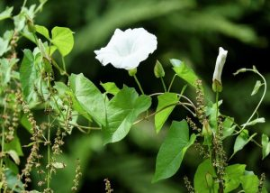 Your Guide to Common Weeds in the Garden