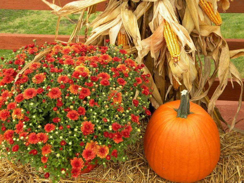 cornstalk decor, cornstalk, Fall, decorate