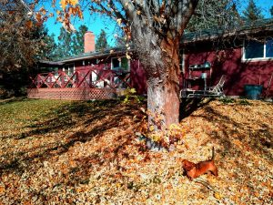 extra Fall leaves, Fall leaves, what to do