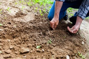 gardener, gardening