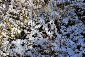 preparing your lawn for Winter, winter, grass