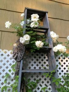 old ladders in the garden
