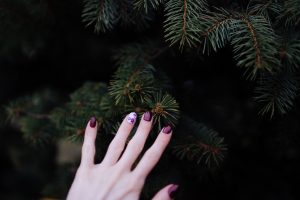 Christmas trees, pine, fir, spruce