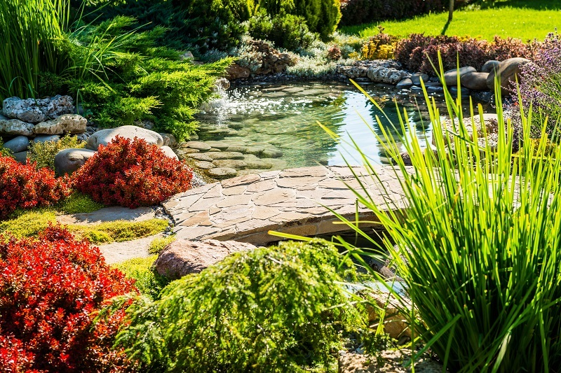 landscaping, landscape, backyard