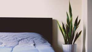 bedroom plants, benefits, sleep