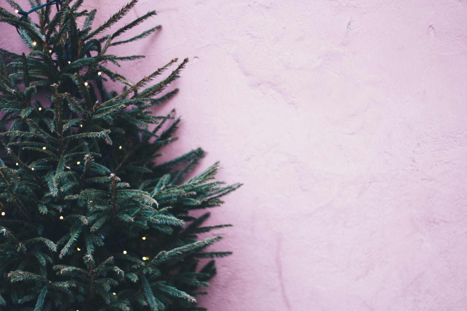 How To Choose And Cut Your Own Christmas Tree