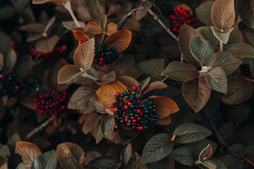 fall wreaths, fall wreaths for sale, fall garland, pier one fall wreaths, pier one wreaths, fall garland with lights, pier one imports fall wreaths, pier 1 wreaths, autumn garland, where to buy fall wreaths, autumn wreath, small fall wreaths, outdoor fall garland, large fall wreaths, harvest wreaths sale, fall outdoor wreaths, pier one christmas wreaths, fall door wreaths sale, fall door wreaths, autumn wreaths for sale, big fall wreaths, autumn garland with lights, large fall door wreaths, fall harvest wreaths outdoor, discount fall wreaths, outdoor fall leaf garland, cheap fall wreaths, modern fall wreath, fall wreaths for front door, autumn door wreaths, fall autumn door wreaths, best fall wreaths, fall wreaths 2017, autumn wreaths for front door, fall wreath ideas, beautiful fall door wreaths, fall door decorations, beautiful wreaths, images of fall wreaths, wreath trends 2017, beautiful fall wreaths, autumn door decorations, unique fall wreaths, best fall wreath ideas, elegant fall decorations, fall themed wreaths, autumn door decoration ideas, how to make fall wreaths for front door, fall front door decorations, target fall wreaths, elegant fall wreaths, fall wreath leaves, fall wreath designs, real fall wreaths, fall reef ideas, fall door, colorful wreath ideas, design a wreath, how to make a fall wreath, unique door wreaths, outdoor wreath, fall leaf garland, harvest wreath, fall berry wreath, fall wreath canada, fall garland decorations, fall wreaths for outdoor use, outdoor fall wreaths front door, autumn wreath canada, autumn leaf garland, fall door garland, home depot halloween wreath, garland wreath, fall foliage wreath, fall foliage garland, balsam hill garland, balsam hill wreaths, fall foliage decorations, autumn wreaths for sale uk, etsy fall wreaths, fall reefs, handmade fall wreaths, etsy wreaths, unusual fall wreaths, fresh fall wreaths, rustic wreaths and arrangements, autumn wreath ireland, wreath ideas, diy fall wreaths, diy wreath ideas, spri