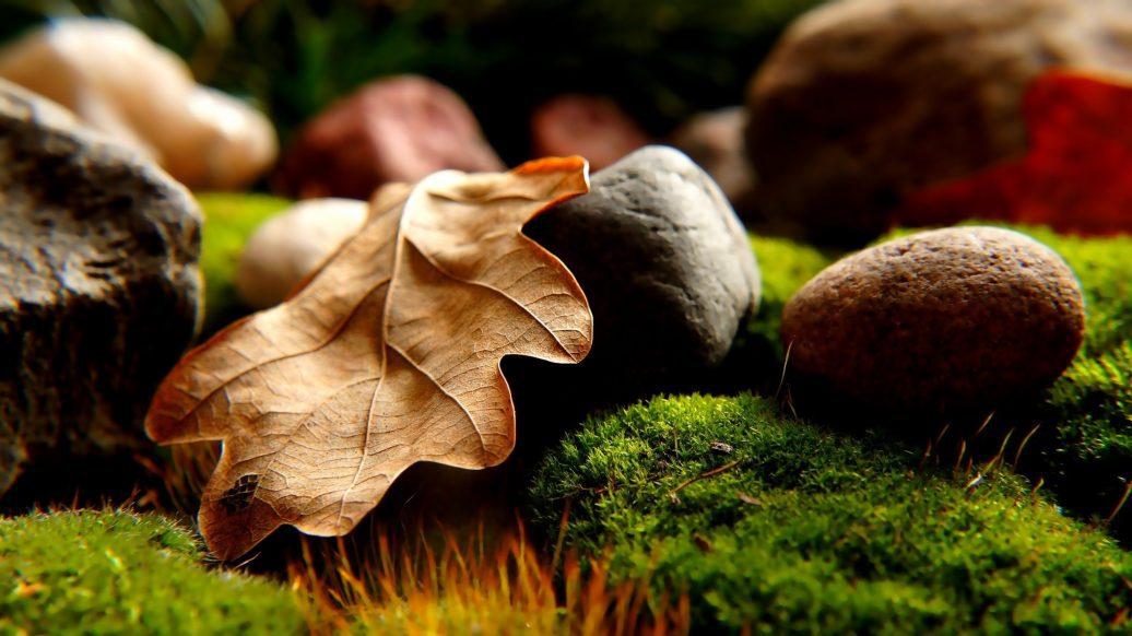 japanese rock garden, rock garden, gardening, DIY, backyard ideas