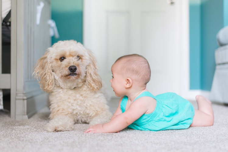 letting your kids grow up with a dog, baby, dog, benefits, puppy