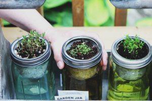 low budget gardening, save money, gardening