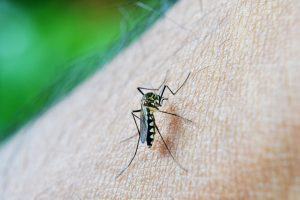 prevent mosquito bites naturally, repellant, natural, bug