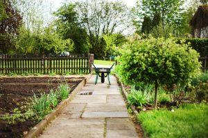 keep bugs away, garden